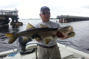 Florida snook caught near a fishing pier in charlotte county